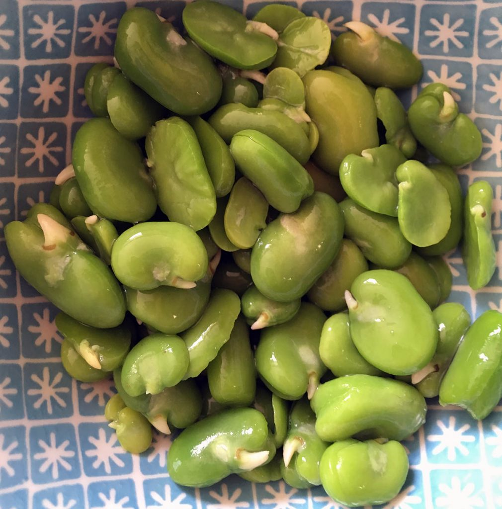 How to prepare broad beans